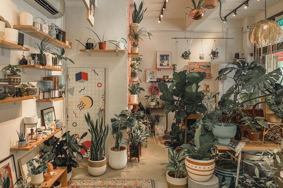Starting Plant Shops