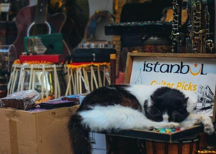 how to start a pet shop: cat